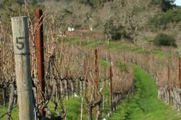 Vineyard Dormancy